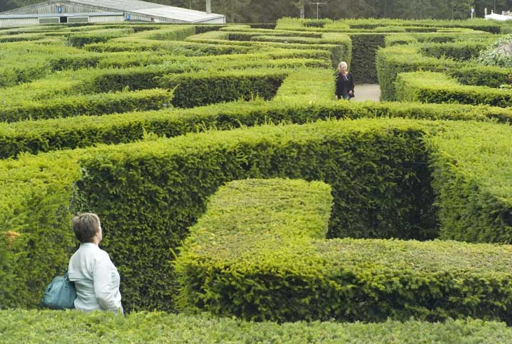 lost in maze