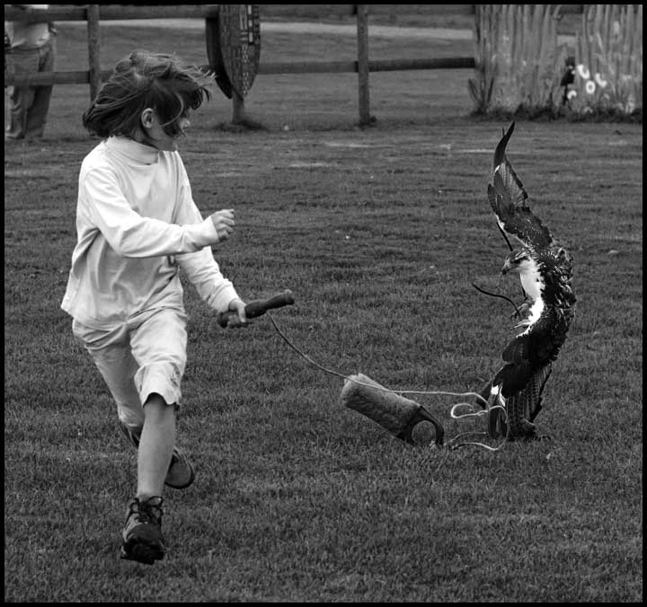 girl being chased by falcon